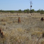 Termite mounds are everywhere