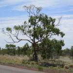 A tree
