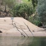 Crocodile nesting grounds all around Katherine Gorge