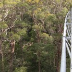 Valley of the Giants suspension bridge - 45m at its highest